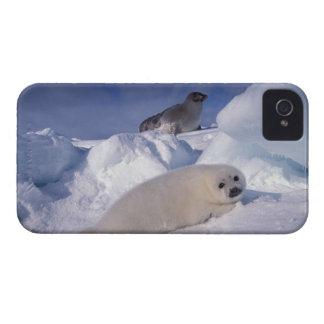 Norteamérica, Canadá, Quebec, la 2 de Iles de iPhone 4 Protector