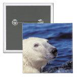 Norteamérica, Círculo Polar Ártico. Oso polar Pins