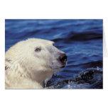 Norteamérica, Círculo Polar Ártico. Oso polar Felicitación