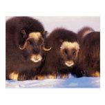 Norteamérica, los E.E.U.U., Alaska, Círculo Polar Postales
