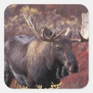 Norteamérica, los E.E.U.U., Alaska, Denali NP. Pegatina Cuadrada
