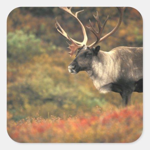 Norteamérica, los E.E.U.U., Alaska, Denali NP, Pegatina Cuadrada
