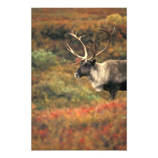 Norteamérica, los E.E.U.U., Alaska, Denali NP, tun Fotografía