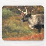 Norteamérica, los E.E.U.U., Alaska, Denali NP, tun Tapetes De Ratón