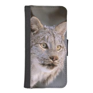 Norteamérica, los E.E.U.U., Alaska, Haines. Lince Funda Tipo Cartera Para iPhone 5