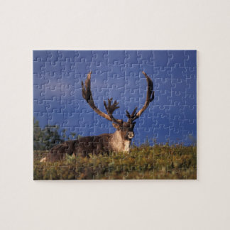 Norteamérica, los E.E.U.U., Alaska, nacional de De Puzzles