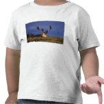 Norteamérica, los E.E.U.U., Alaska, nacional de Camisetas