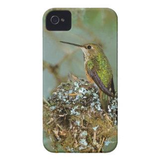 Norteamérica, los E.E.U.U., Alaska. Pájaro rufo iPhone 4 Case-Mate Cárcasa
