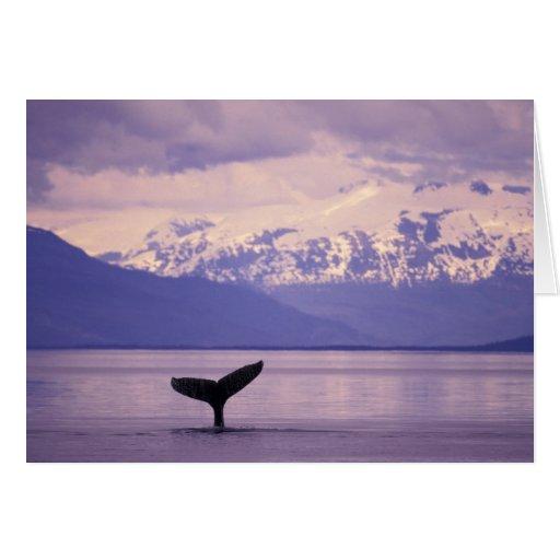 Norteamérica, los E.E.U.U., Alaska, paso interior Tarjeton