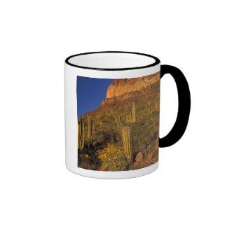 Norteamérica, los E.E.U.U., Arizona, cactus 2 del Taza A Dos Colores