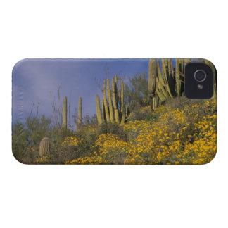Norteamérica, los E.E.U.U., Arizona, cactus del iPhone 4 Carcasas
