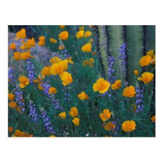 Norteamérica, los E.E.U.U., Arizona, cactus del Postales
