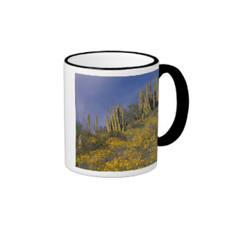 Norteamérica, los E.E.U.U., Arizona, cactus del Taza A Dos Colores