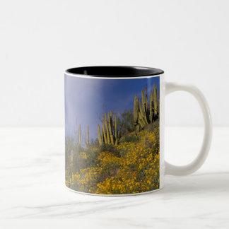 Norteamérica, los E.E.U.U., Arizona, cactus del Taza Dos Tonos