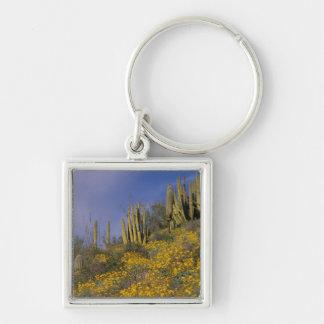 Norteamérica, los E.E.U.U., Arizona, cactus del tu Llavero Personalizado