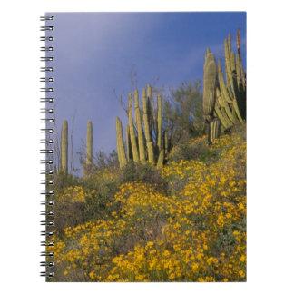 Norteamérica, los E.E.U.U., Arizona, cactus del tu Note Book