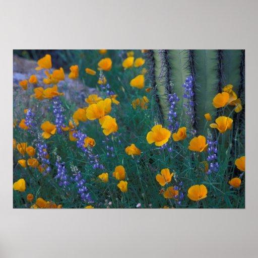 Norteamérica, los E.E.U.U., Arizona, cactus del tu Impresiones