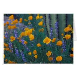 Norteamérica, los E.E.U.U., Arizona, cactus del tu Tarjeta De Felicitación