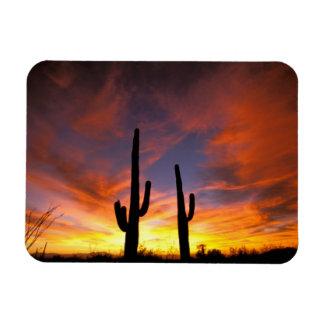 Norteamérica, los E.E.U.U., Arizona, desierto de S Imanes Rectangulares