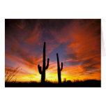 Norteamérica, los E.E.U.U., Arizona, desierto de S Felicitacion