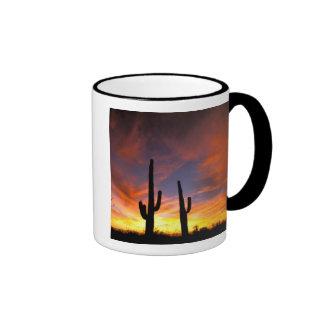 Norteamérica los E E U U Arizona desierto de S Taza