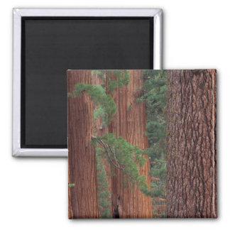 Norteamérica, los E.E.U.U., California, Yosemite N Imanes
