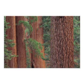 Norteamérica, los E.E.U.U., California, Yosemite N Fotografias