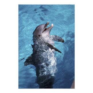 Norteamérica, los E.E.U.U., Hawaii. Delfín 2 Cojinete
