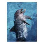 Norteamérica, los E.E.U.U., Hawaii. Delfín 2 Postal