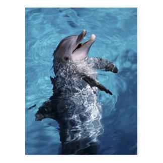 Norteamérica, los E.E.U.U., Hawaii. Delfín 2 Tarjetas Postales