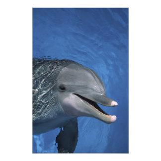 Norteamérica, los E.E.U.U., Hawaii. Delfín Fotografías