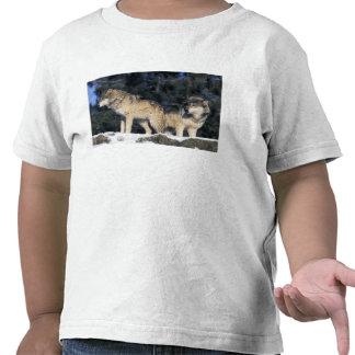 Norteamérica, los E.E.U.U., Minnesota. Canis 2 del Camisetas