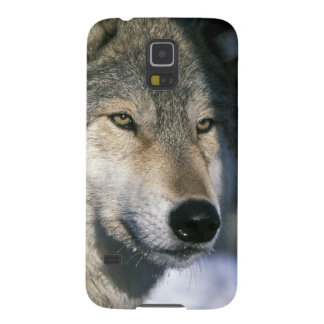 Norteamérica, los E.E.U.U., Minnesota. Canis 3 del Funda De Galaxy S5