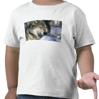 Norteamérica, los E.E.U.U., Minnesota. Canis 3 del Camisetas