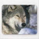 Norteamérica, los E.E.U.U., Minnesota. Canis 3 del Alfombrilla De Ratón