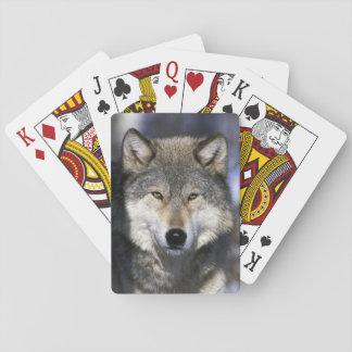 Norteamérica, los E.E.U.U., Minnesota. Canis del l Baraja De Póquer