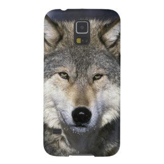 Norteamérica, los E.E.U.U., Minnesota. Canis del l Carcasas Para Galaxy S5
