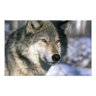 Norteamérica, los E.E.U.U., Minnesota. Canis del l Foto