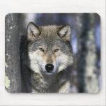 Norteamérica, los E.E.U.U., Minnesota. Canis del l Alfombrilla De Ratones