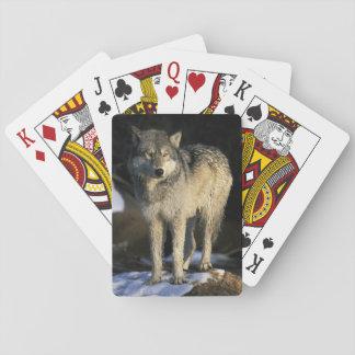 Norteamérica, los E.E.U.U., Minnesota. Lobo (Canis Barajas De Cartas