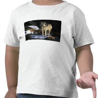 Norteamérica los E E U U Minnesota Lobo Canis Camiseta