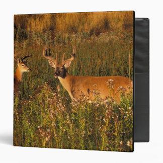 """Norteamérica, los E.E.U.U., Montana, bisonte Carpeta 1 1/2"""""""