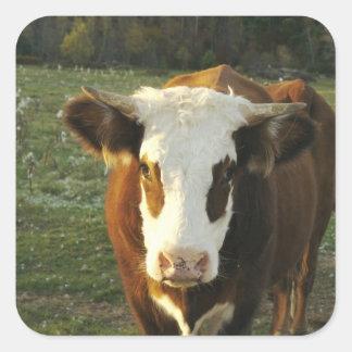 Norteamérica, los E.E.U.U., New Hampshire. Un toro Pegatina Cuadrada