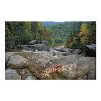 Norteamérica, los E.E.U.U., NH, follaje de otoño e Cojinete