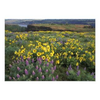 Norteamérica, los E.E.U.U., Oregon, el río Columbi Cojinete