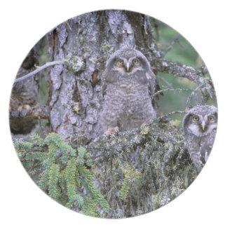 Norteamérica, los E.E.U.U., Oregon. Madriguera de  Platos De Comidas