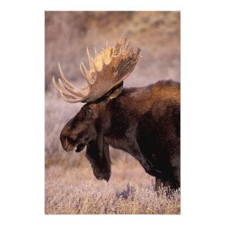 Norteamérica, los E.E.U.U., Wyoming, Teton magnífi Fotografías