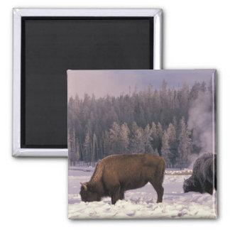 Norteamérica los E E U U Wyoming Yellowstone N Imán Para Frigorifico