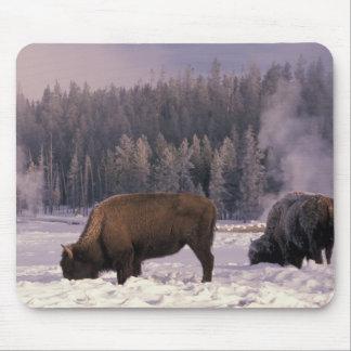 Norteamérica los E E U U Wyoming Yellowstone N Alfombrillas De Ratones