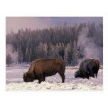 Norteamérica, los E.E.U.U., Wyoming, Yellowstone N Postales